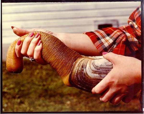 http://unnatural.ru/images/Geoduck/1.jpg