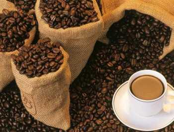 kopy luwak Самый лучший в мире кофе, которое Вы вряд ли захотите попробовать