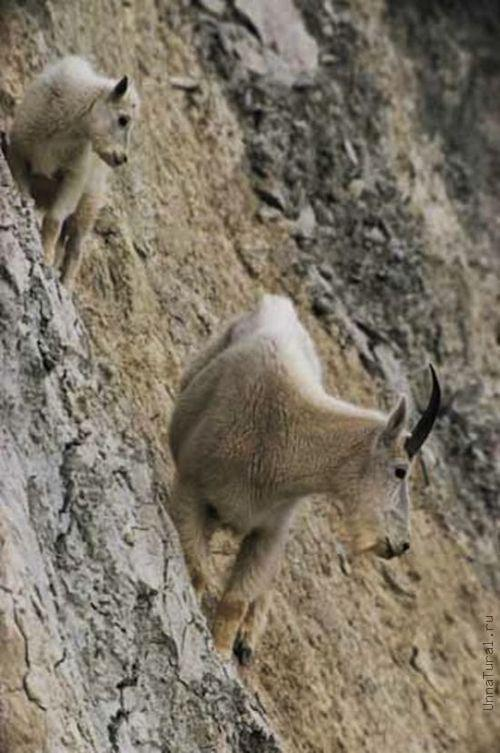 http://unnatural.ru/images/Rock%20Climbers/5.jpg