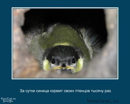 anifacts6 Самые необычные факты о животных