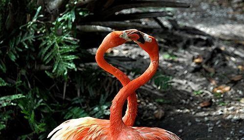animal gay12 «Животный гомосексуализм»