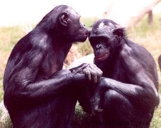 animal gay16 «Животный гомосексуализм»