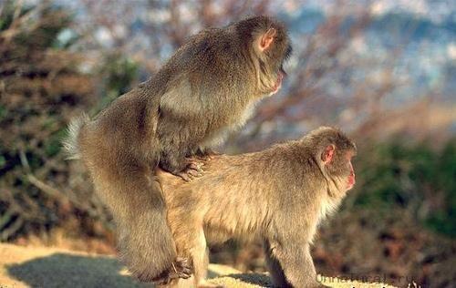 animal gay9 «Животный гомосексуализм»