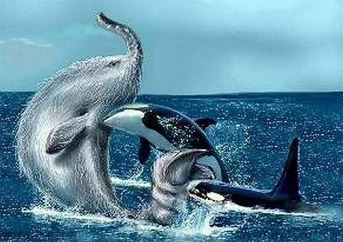 5 Морские чудовища, выброшенные на берег