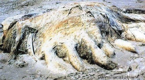 7 Морские чудовища, выброшенные на берег
