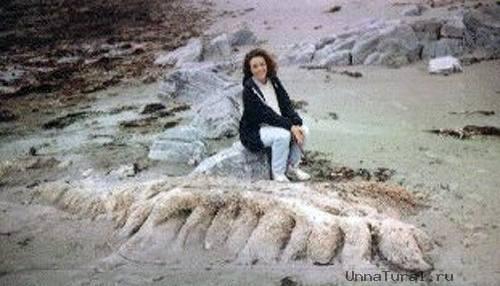 8 Морские чудовища, выброшенные на берег