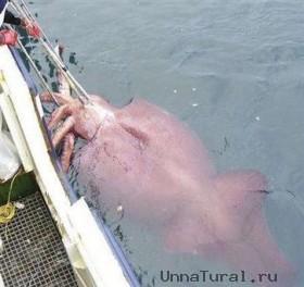 9 Морские чудовища, выброшенные на берег
