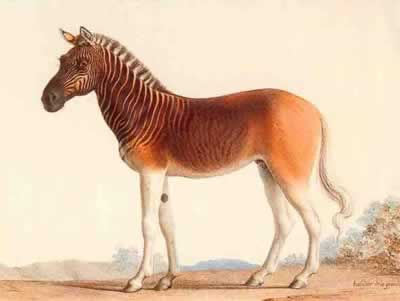 Quagga Топ 5. Самые удивительные вымершие животные