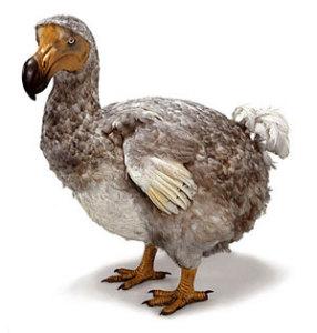 dodo Топ 5. Самые удивительные вымершие животные