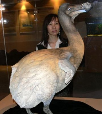 dodo 1 Топ 5. Самые удивительные вымершие животные