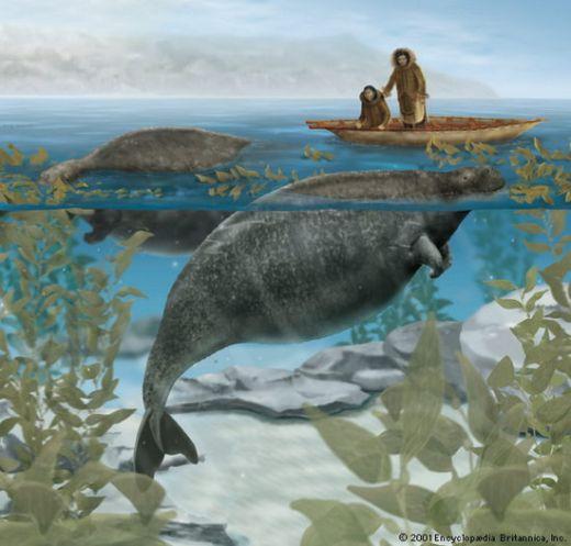 steller seacow Топ 5. Самые удивительные вымершие животные