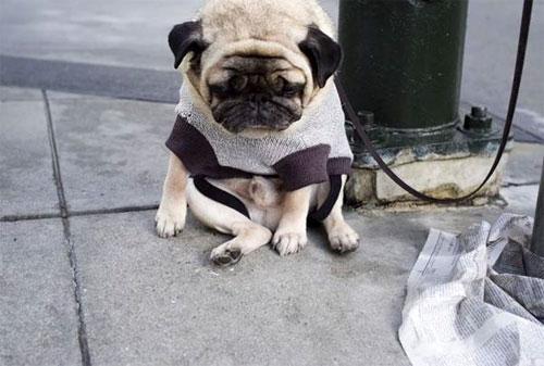 depressdog02 Самый грустный пес в мире