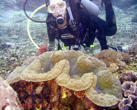 http://unnatural.ru/images/giant-clam/giant-clam.jpg