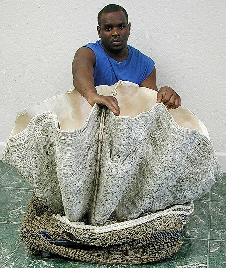http://unnatural.ru/images/giant-clam/giant-clam6.jpg