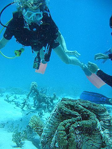 giant clam7 Моллюск убийца или ракушка людоед   самый крупный моллюск на Земле