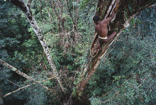 10 Жизнь на деревьях