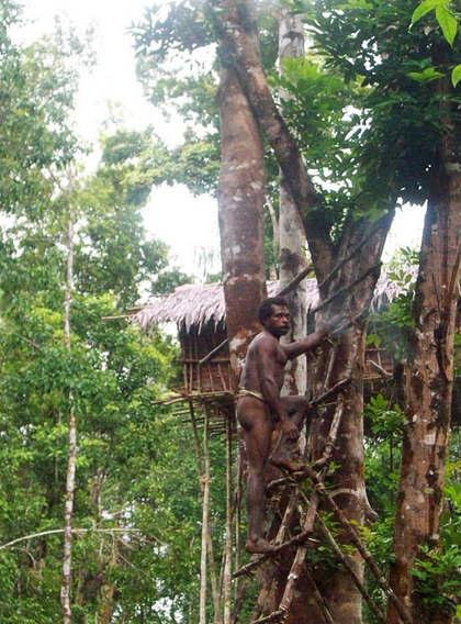 2 Жизнь на деревьях