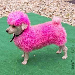 http://unnatural.ru/images/mouding2/pink_lamb_mingo.jpg