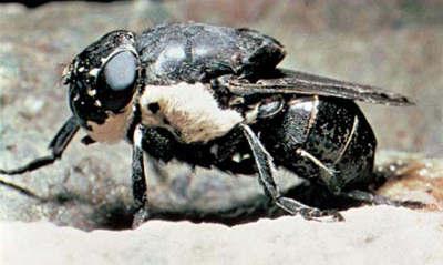1 Топ 13. Самые страшные паразиты в мире