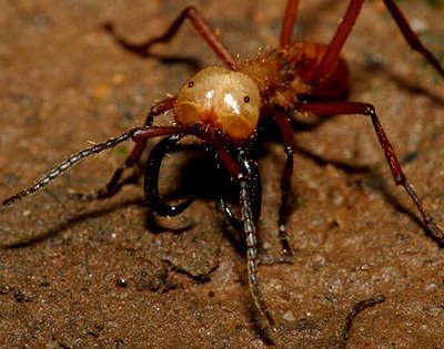 2 Топ 10. Самые опасные насекомые в мире