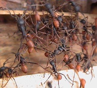2 1 Топ 10. Самые опасные насекомые в мире