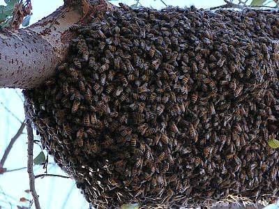 3 Топ 10. Самые опасные насекомые в мире