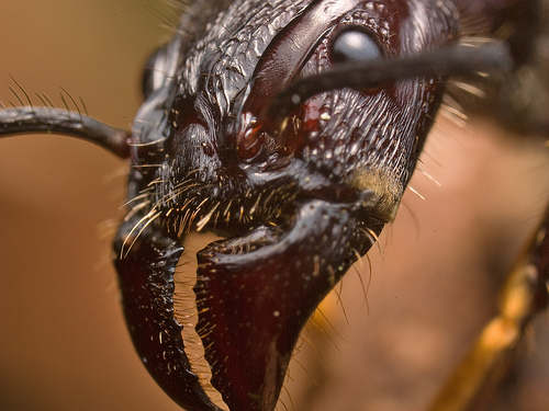 4 Топ 10. Самые опасные насекомые в мире