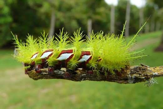 7 Топ 10. Самые опасные насекомые в мире