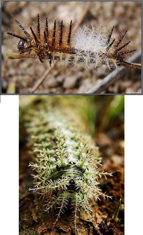7 2 Топ 10. Самые опасные насекомые в мире