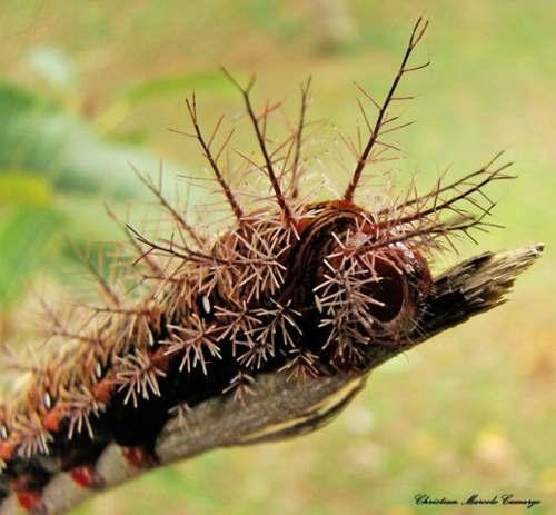 7 3 Топ 10. Самые опасные насекомые в мире