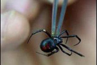 8 1 Топ 10. Самые опасные насекомые в мире
