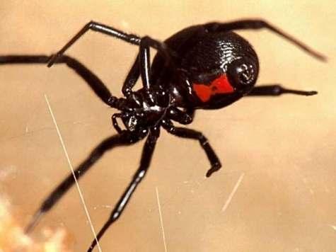 8 2 Топ 10. Самые опасные насекомые в мире