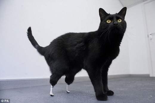 2 Кот с биолапами