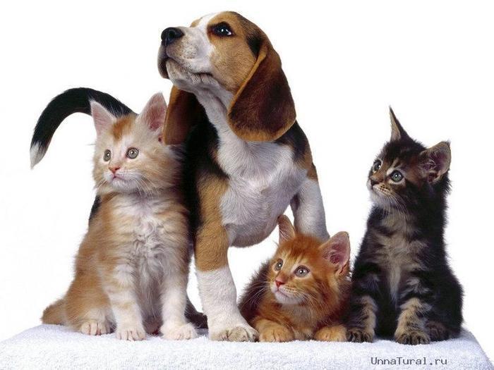 животных кошек и собак
