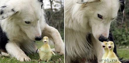 Необычные чувства животных часть i