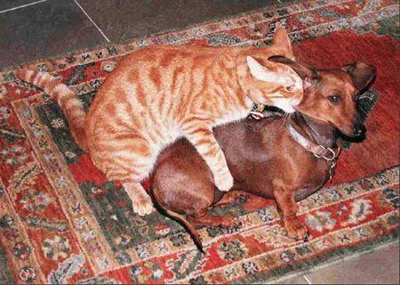 cat humping dog Самые нелепые законы о сексе со всего мира