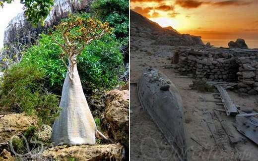 Остров Сокотра. Неужели такое место существует на планете Земля?