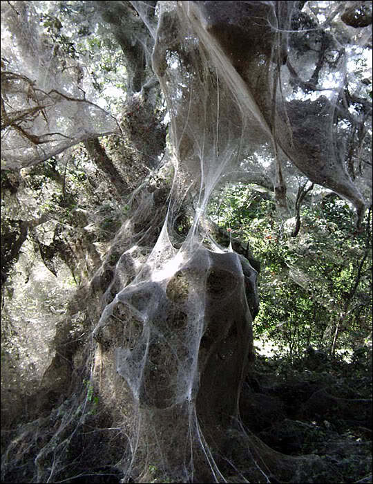 http://unnatural.ru/images/spiderweb/spiders540.jpg