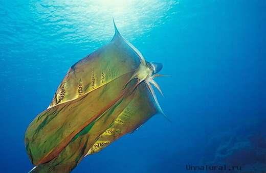 4 Самые необычные существа планеты Земля