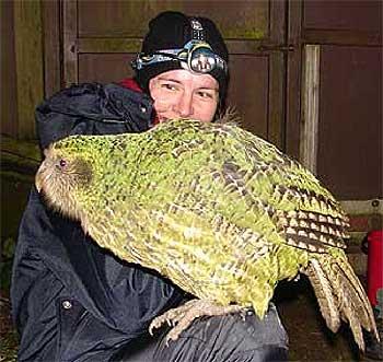 http://unnatural.ru/images/unanimal/kakapo-1.jpg