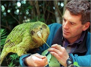 kakapo1 Самые необычные существа планеты Земля. Часть II