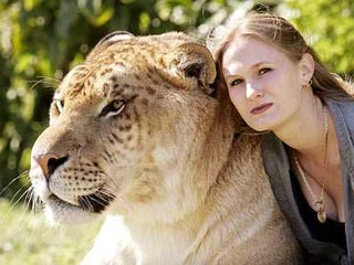 liger03 Самая большая КИСКА в мире