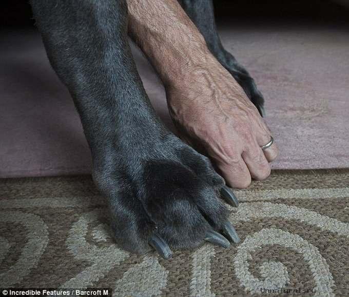 Собака и самая большая собака в мире
