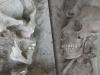 thumbs human alien 3 В Мексике был обнаружен череп «инопланетянина», возраст которого насчитывает 1 000 лет