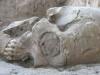 thumbs human alien 6 В Мексике был обнаружен череп «инопланетянина», возраст которого насчитывает 1 000 лет