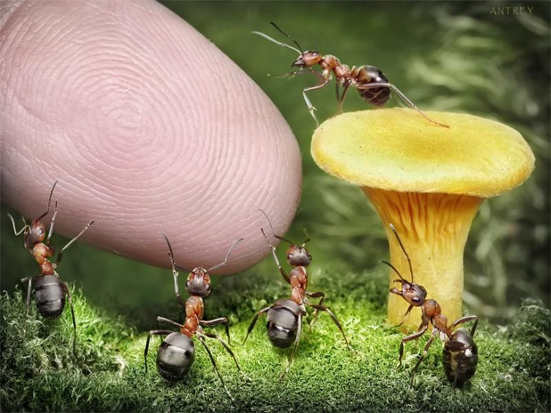 andrey pavlov 17 Тайная жизнь муравьев, сфотографированная Андреем Павловым