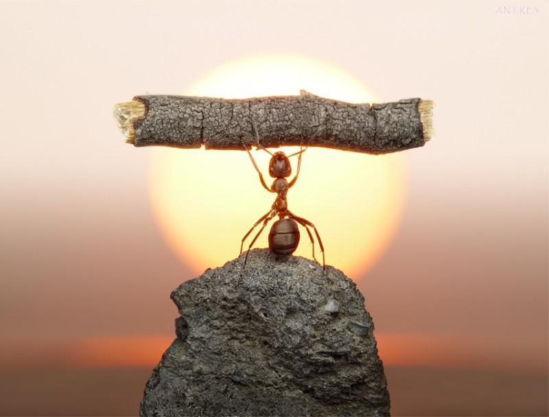 andrey pavlov 23 Тайная жизнь муравьев, сфотографированная Андреем Павловым