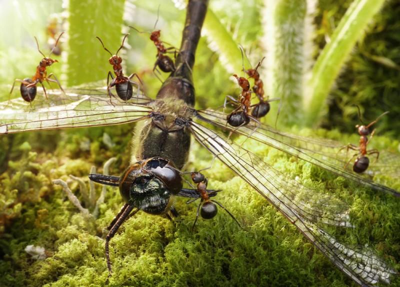 andrey pavlov 26 Тайная жизнь муравьев, сфотографированная Андреем Павловым