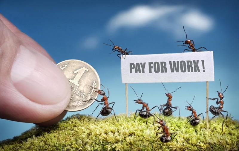 andrey pavlov 4 Тайная жизнь муравьев, сфотографированная Андреем Павловым