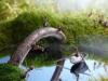 thumbs andrey pavlov 14 Тайная жизнь муравьев, сфотографированная Андреем Павловым